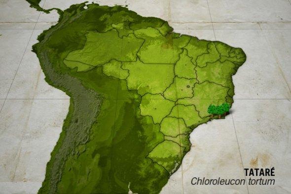 """Fonte: site """"Um pé de quê"""" - http://www.umpedeque.com.br/arvore.php?id=643"""